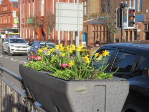 Daffodils 5