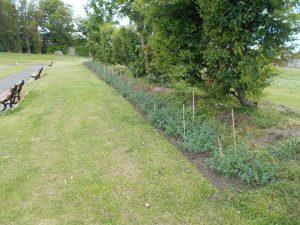 QP Hedge 5