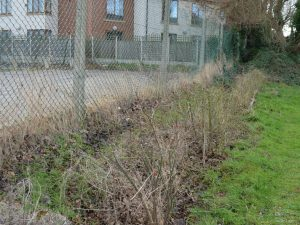 QP Hedge 7