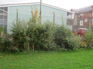 QP Hedge 8