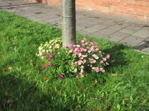 Tree base flowers 7